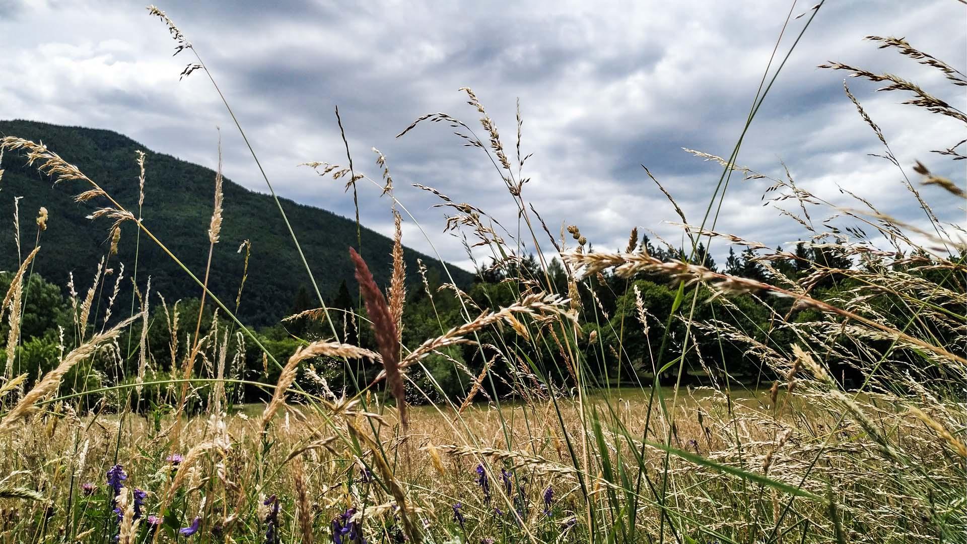 Val D'Ossola - Valle Isorno/Valle Agarina